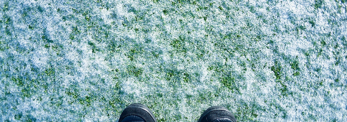 Understanding the Affect of Frost on Your Artificial Grass